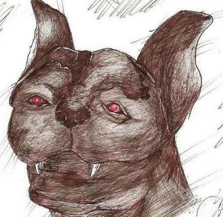 蜜熊(Kinkajou):濒临灭绝动物被村民打死