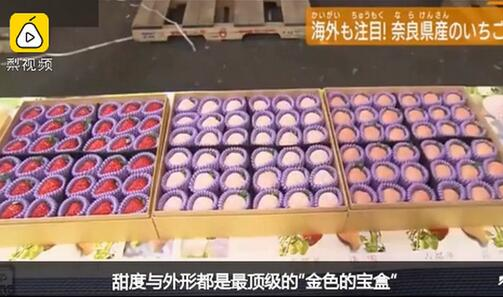 日本纹平柿子拍出天价