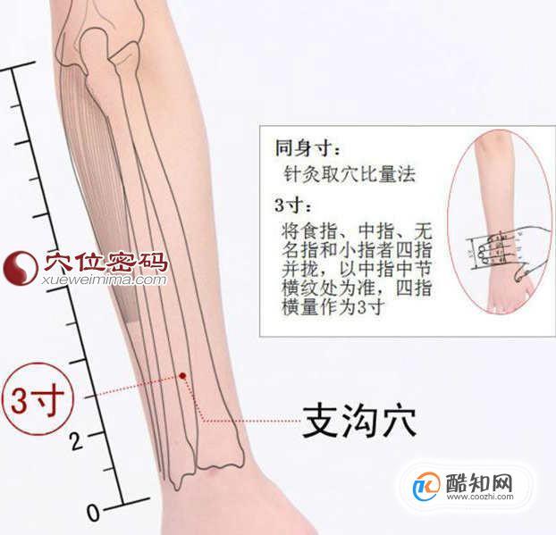 支沟穴位位置图及作用